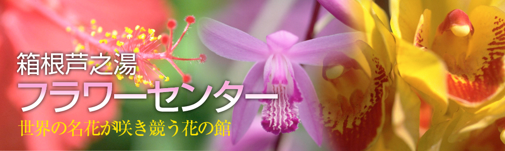 箱根町立 芦之湯フラワーセンター